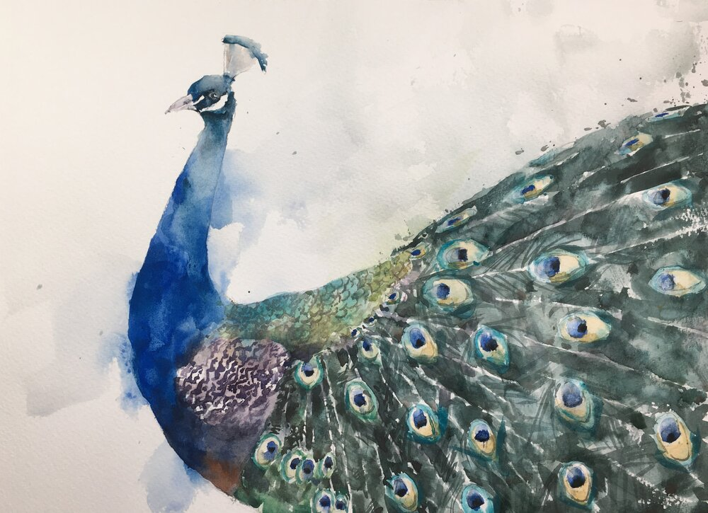 "Peacock. Michele Clamp. Watercolor 11""x14"""