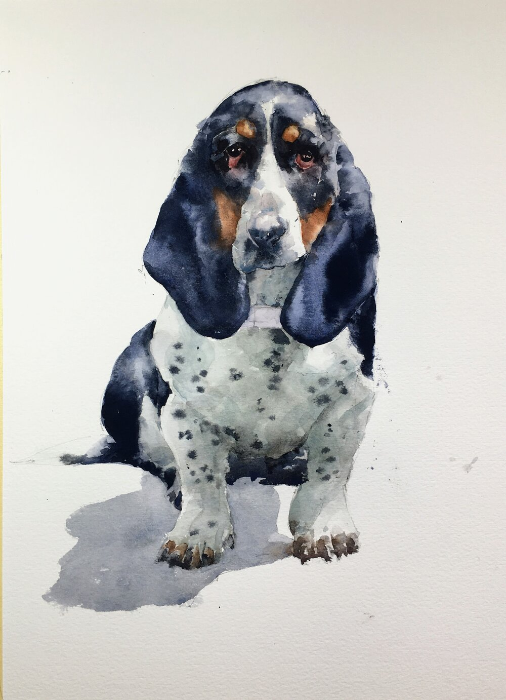 "Basset Hound. Michele Clamp. Watercolor. 14""x11"""