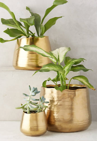Beautiful Gold Planters from Anthropologie.