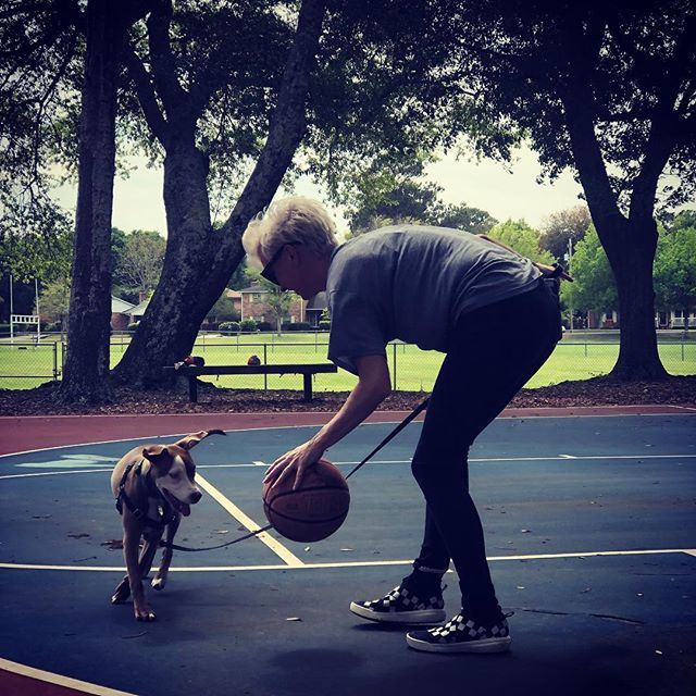 Teach em young. 🏀 . . . #pitbullpuppies #basketballpuppy . . . 📸 @headspace_design