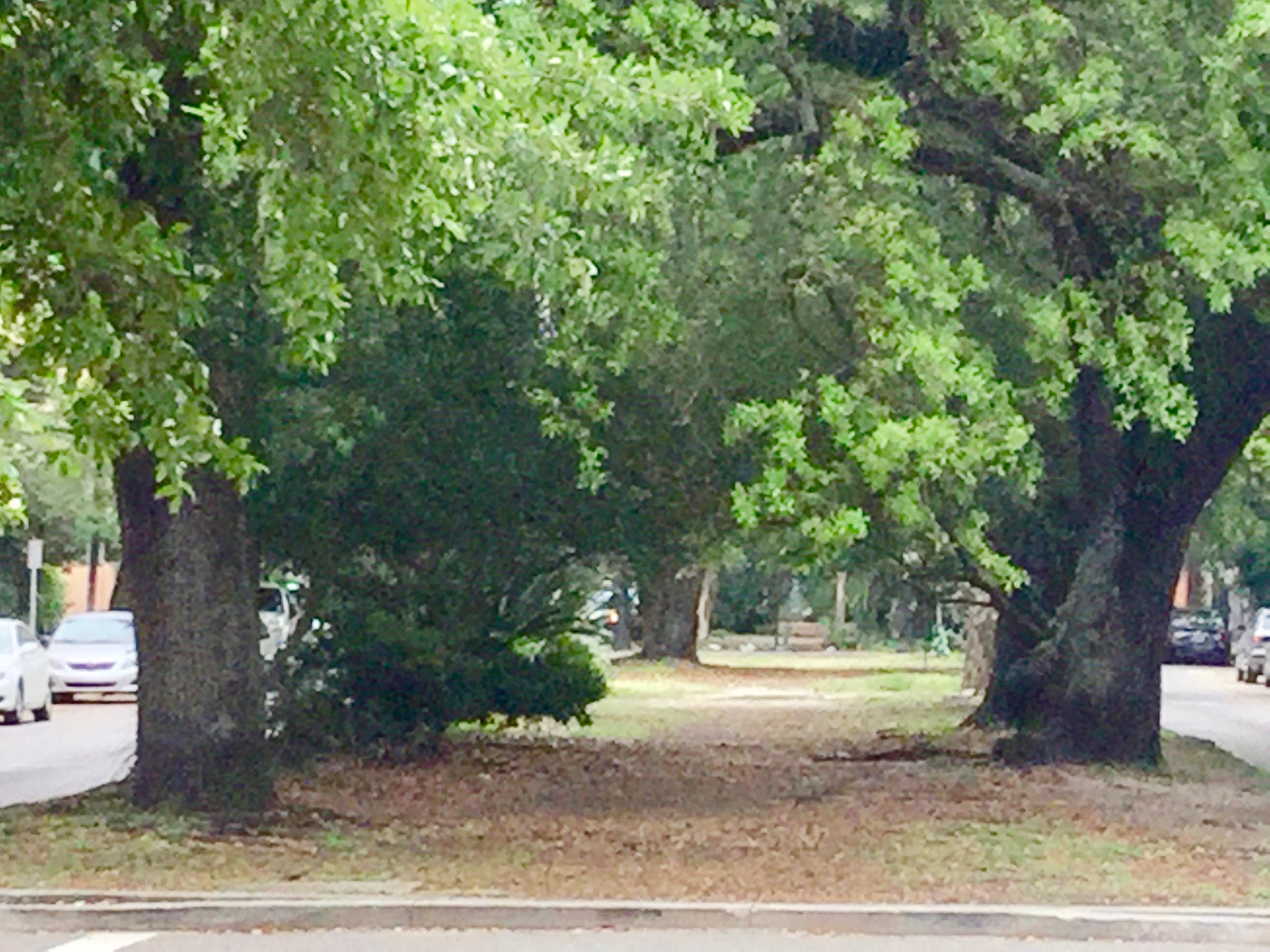 Part of the neutral ground on Esplanade Avenue in New Orleans, LA.