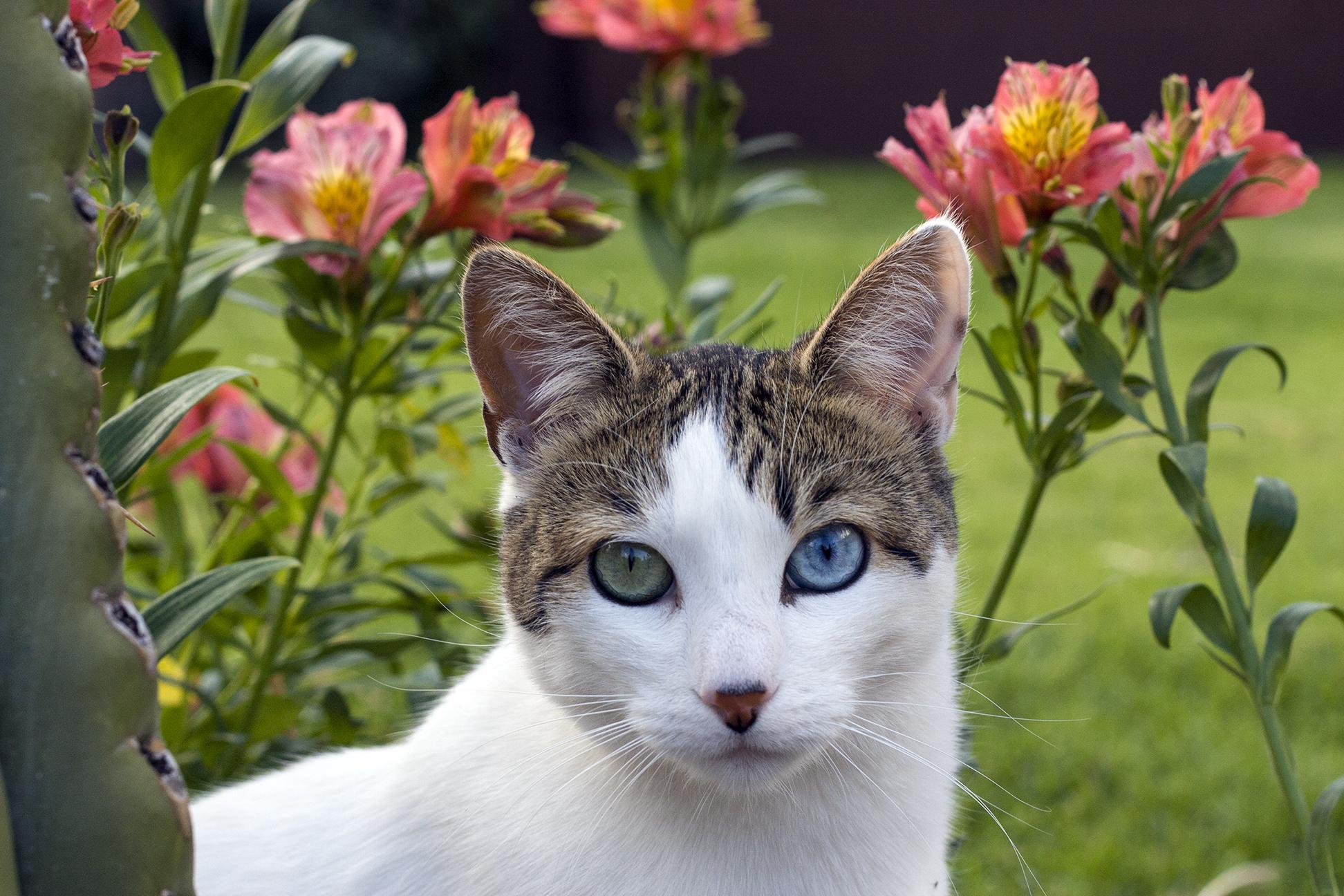 Pi, The Lightworker Cat