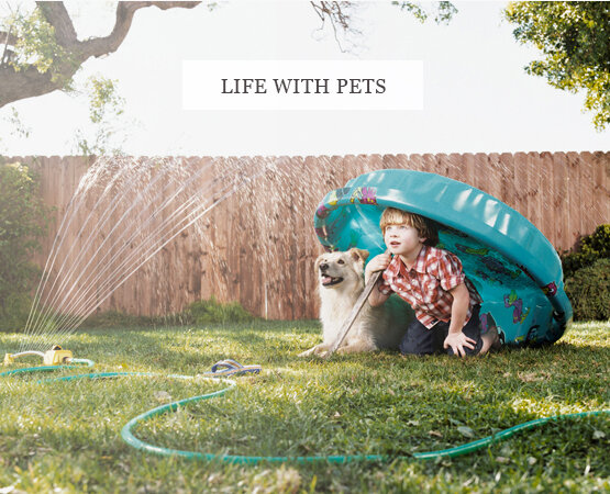 ©Sharon-Montrose-pet-lifestyle-Photography_136.jpg