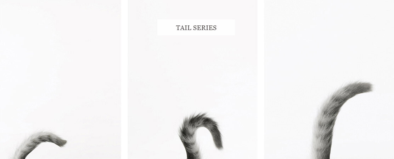 ©Sharon-Montrose_pet-tails-Photography_136.jpg