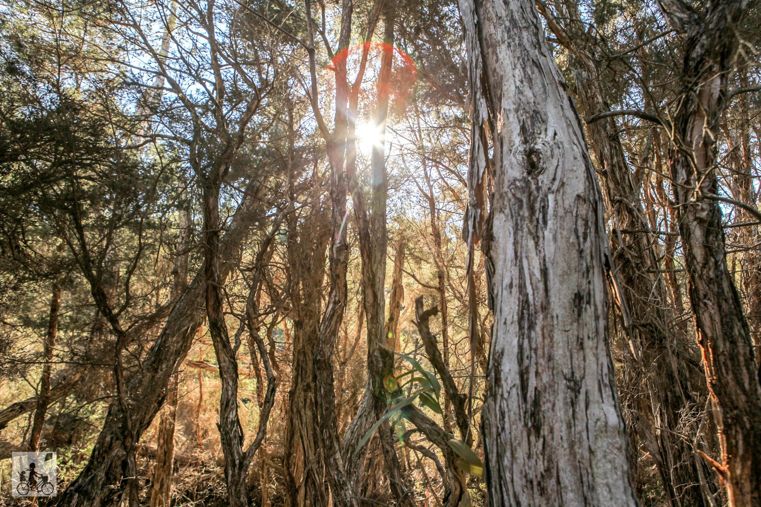 balcombe estuary reserves, Mt Martha - Mamma Knows South