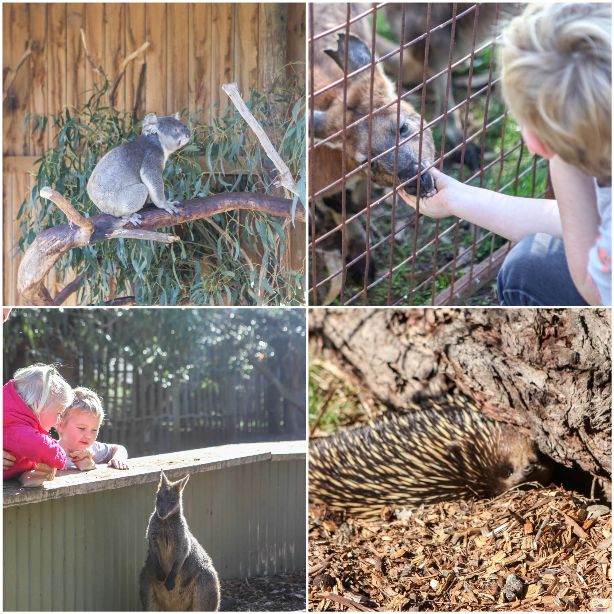 Mamma Knows South - phillip island wildlife park cowes