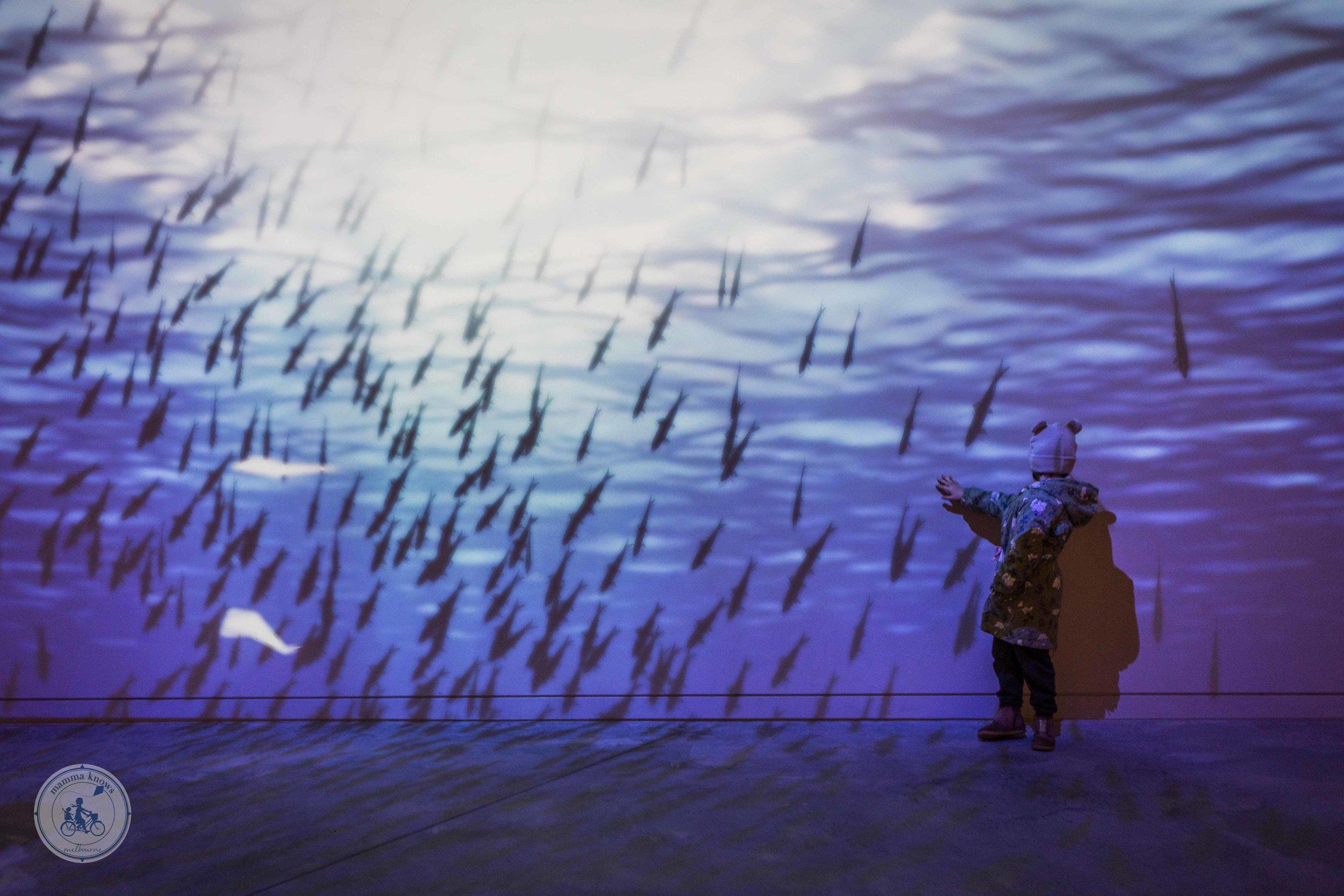 Penguin Parade (6 of 22).jpg
