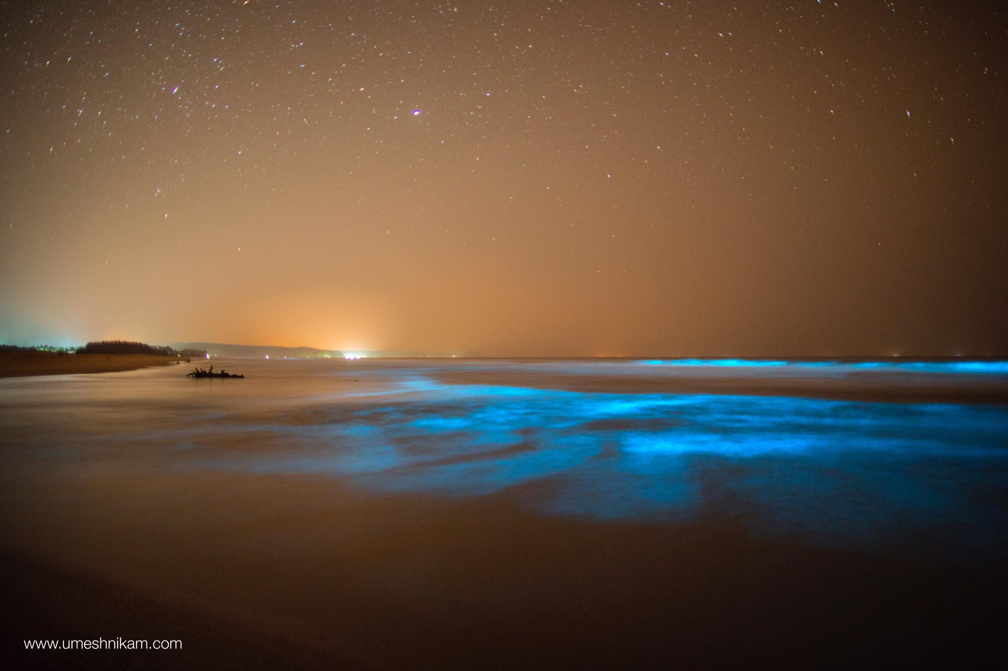 MAHARASHTRA/GUHAGAR/Bioluminescence  Dinoflagellates are a group of flagellate protists belonging to the phylum dinoflagellata. On the coastal regions, one can observe bioluminescence on while the sea waves break on the shore. The bioluminescence is caused due to a reaction of luciferin and luciferase.