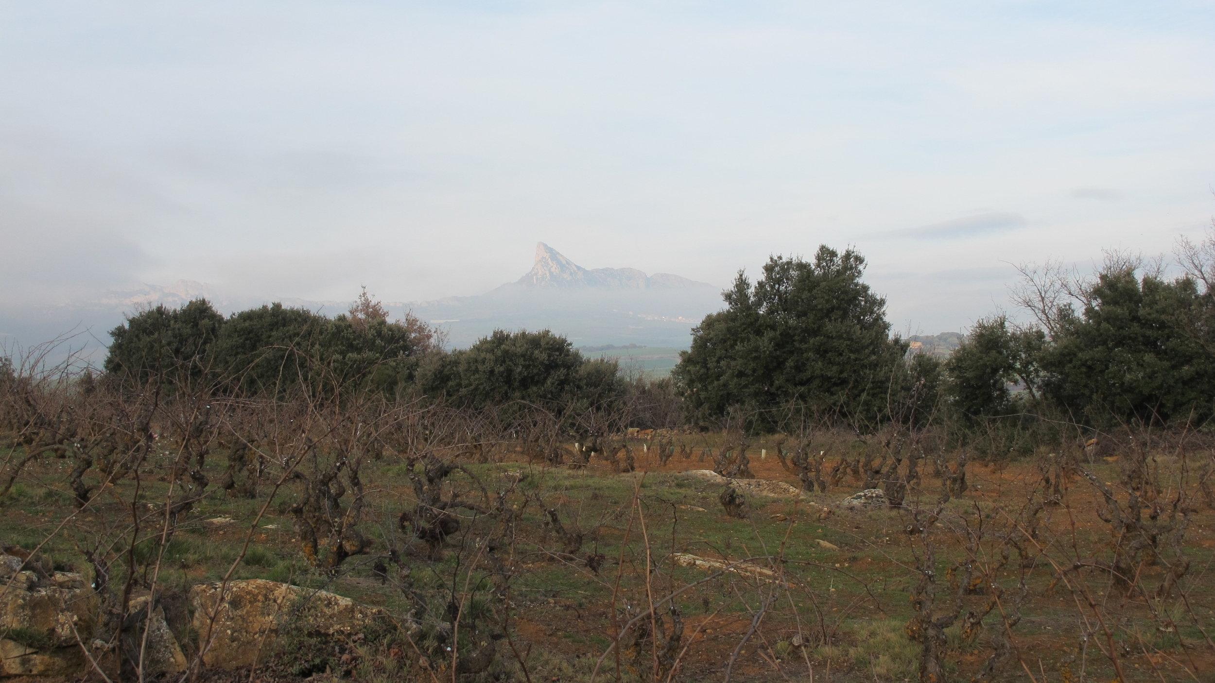 Caunes Minervois, Languedoc