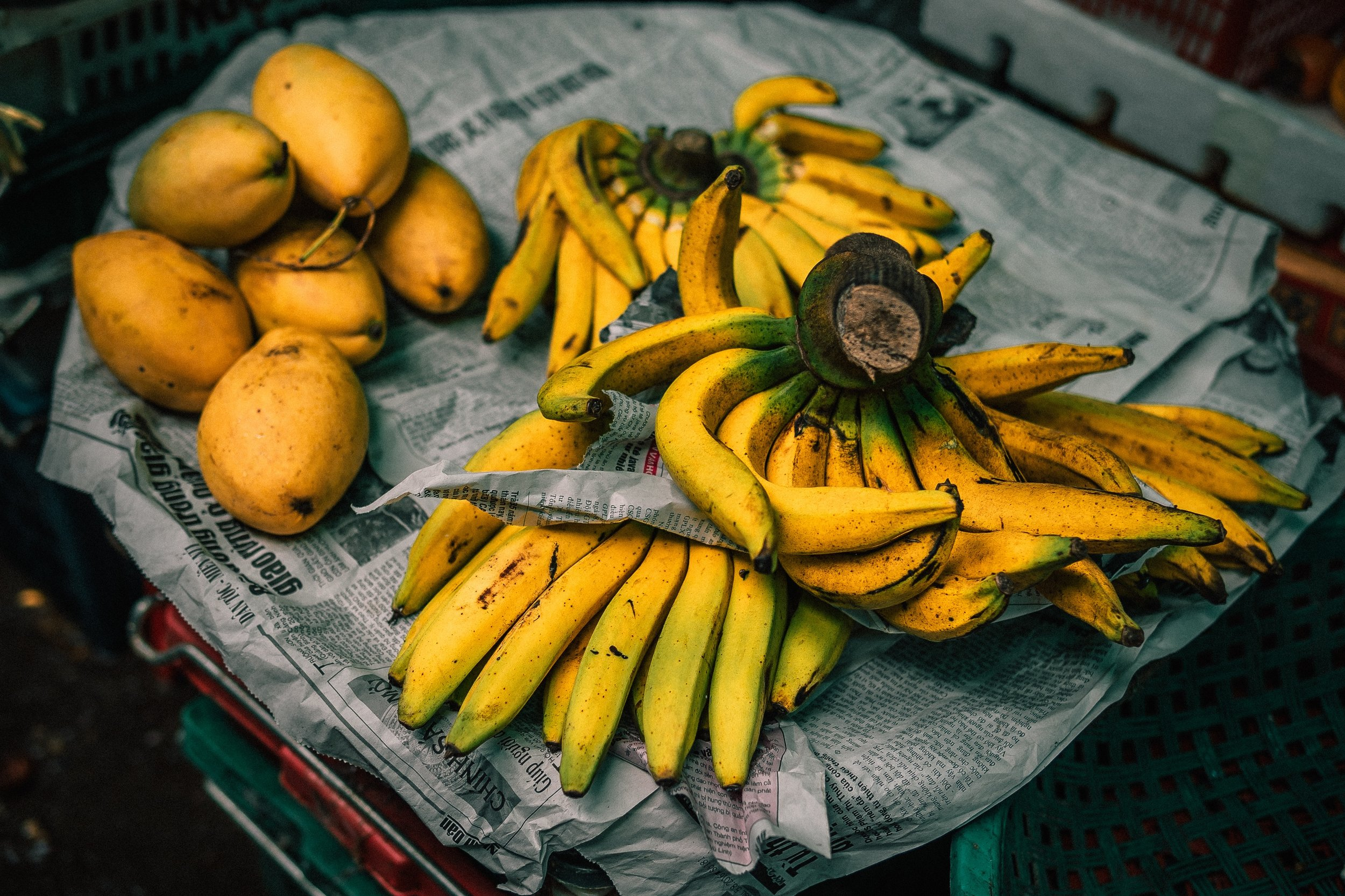 13 WEEKS AGO I BEGAN WORKING ON A BANANA FARM IN AUSTRALIA -