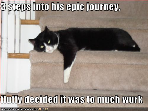 funny-pictures-cat-is-three-steps-into-an-epic-journey.jpg