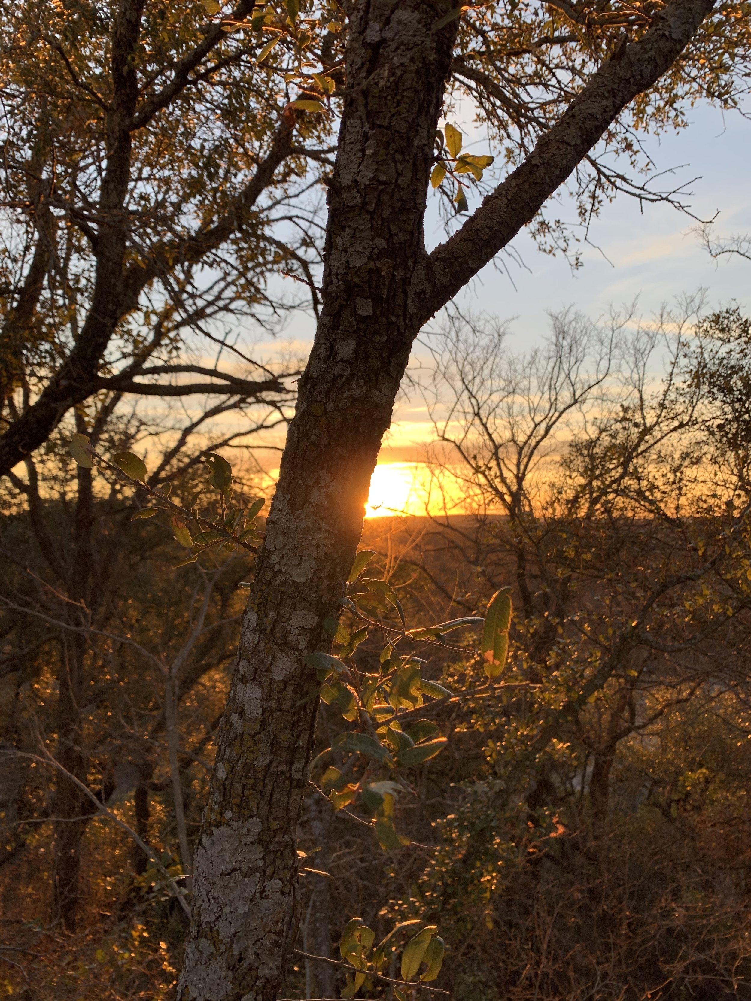 6 Sunset Trees.jpg