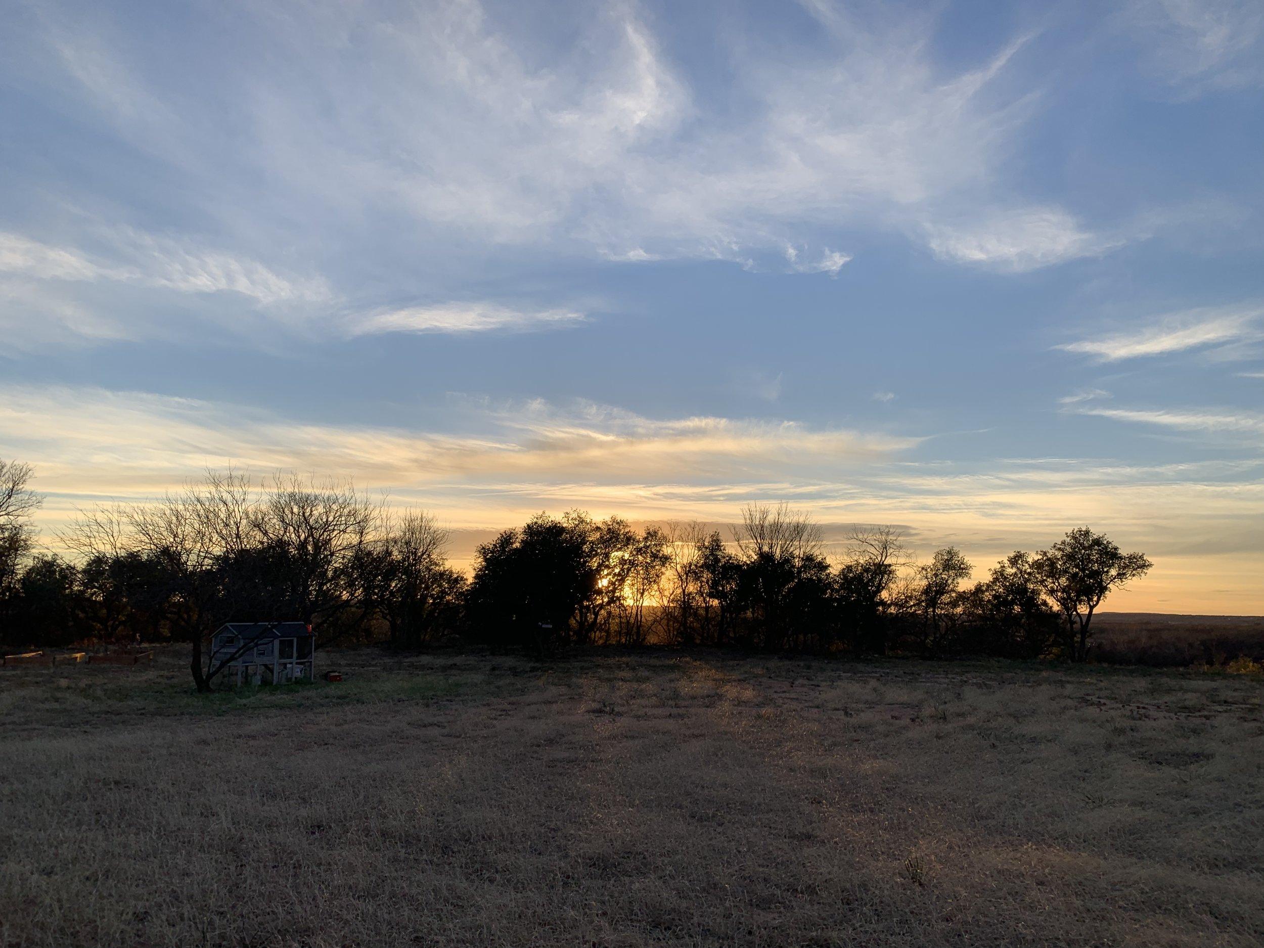 5 Sunset trees.jpg