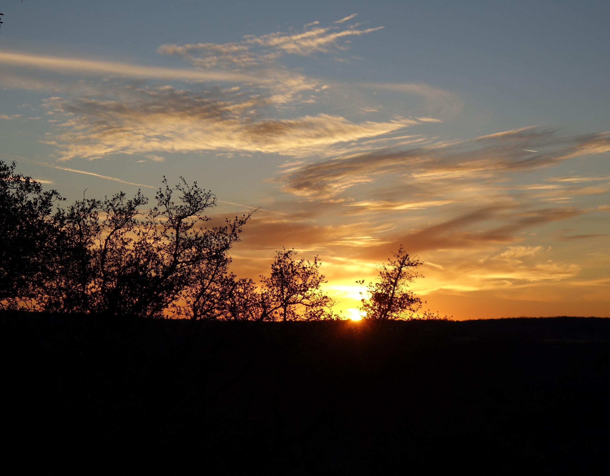 4 Sunset trees.JPG