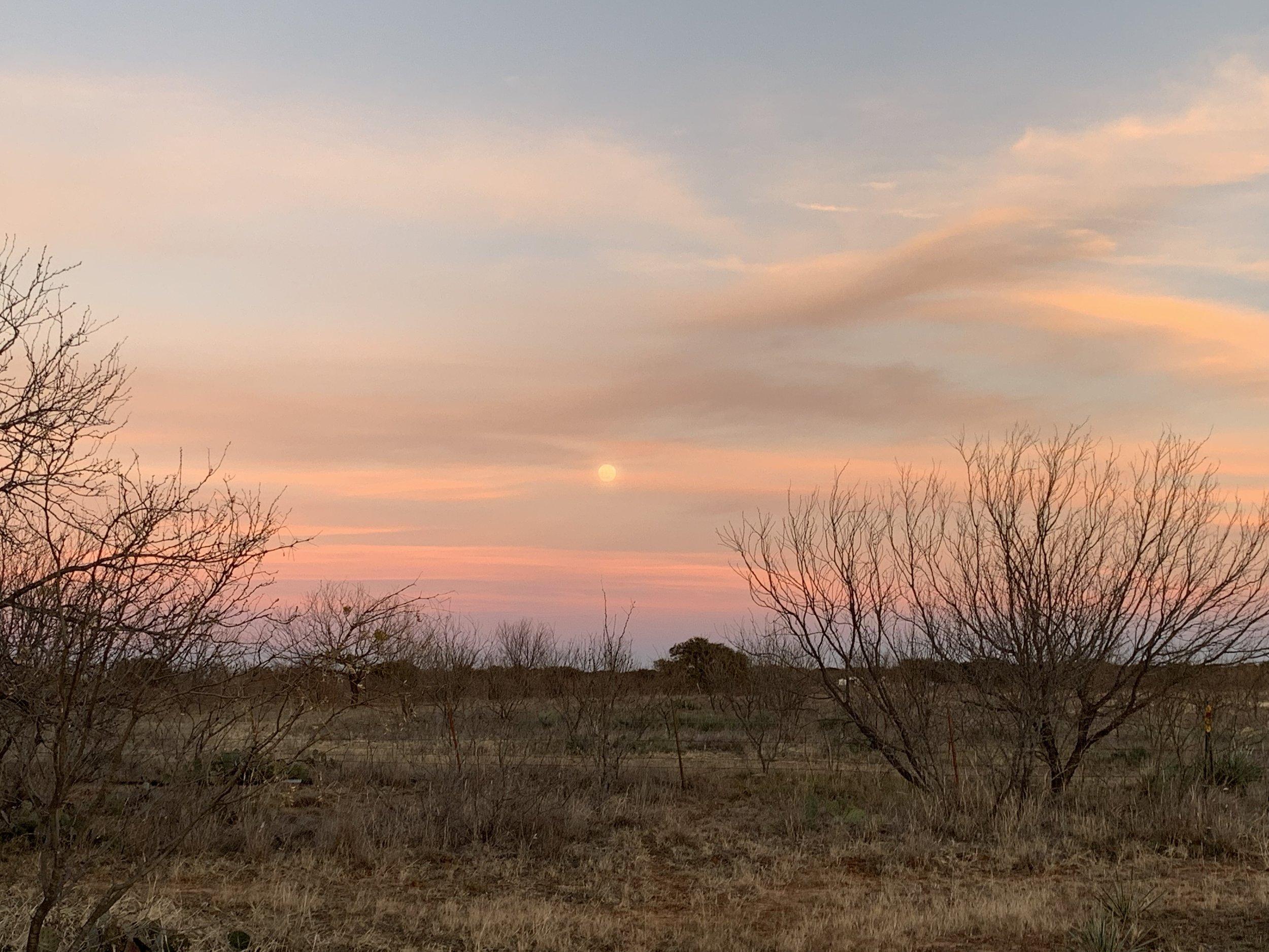 8 sunset trees.jpg