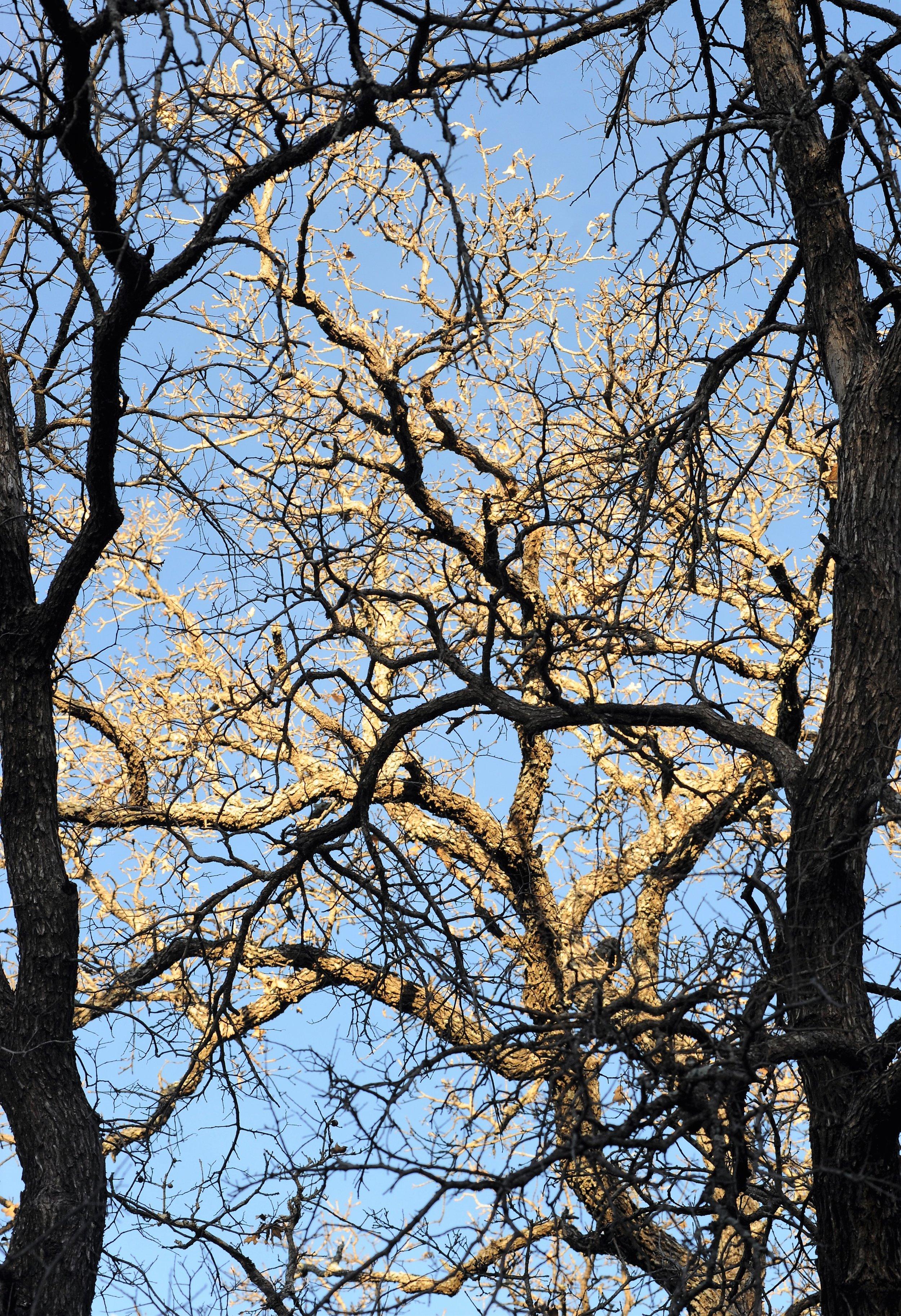 1 Sunset Trees.JPG