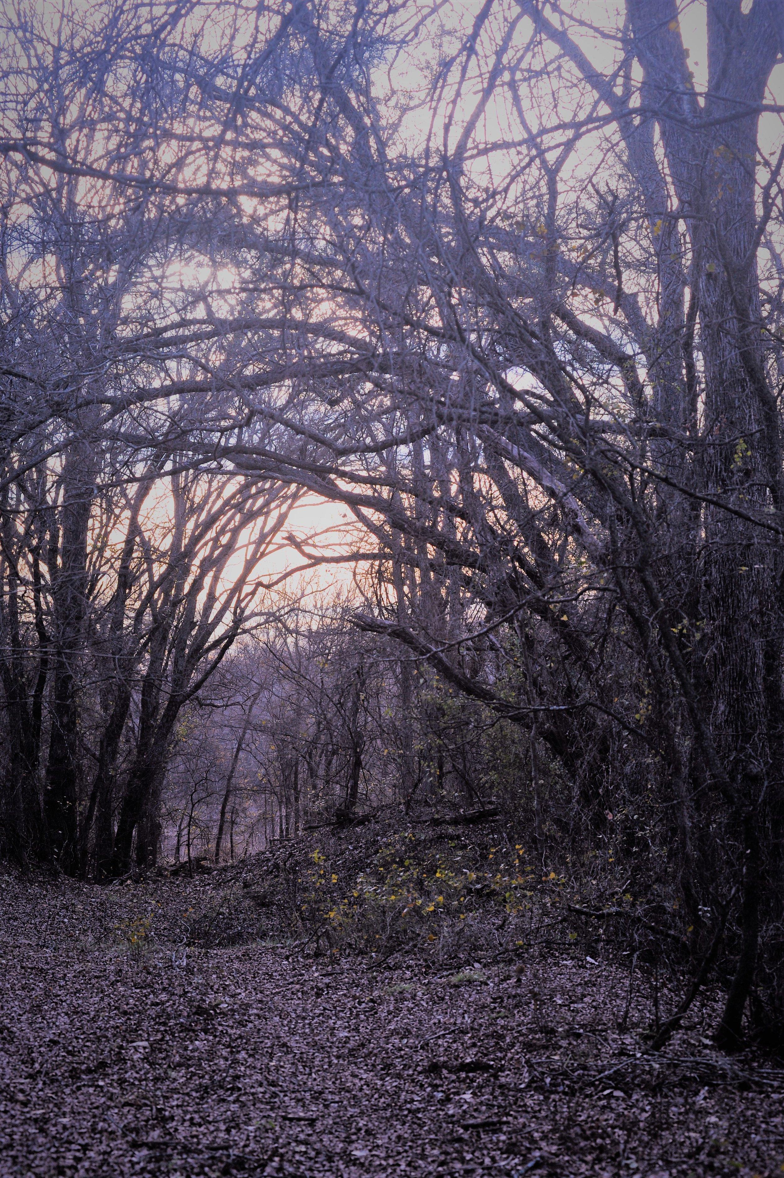 2 Trail.JPG