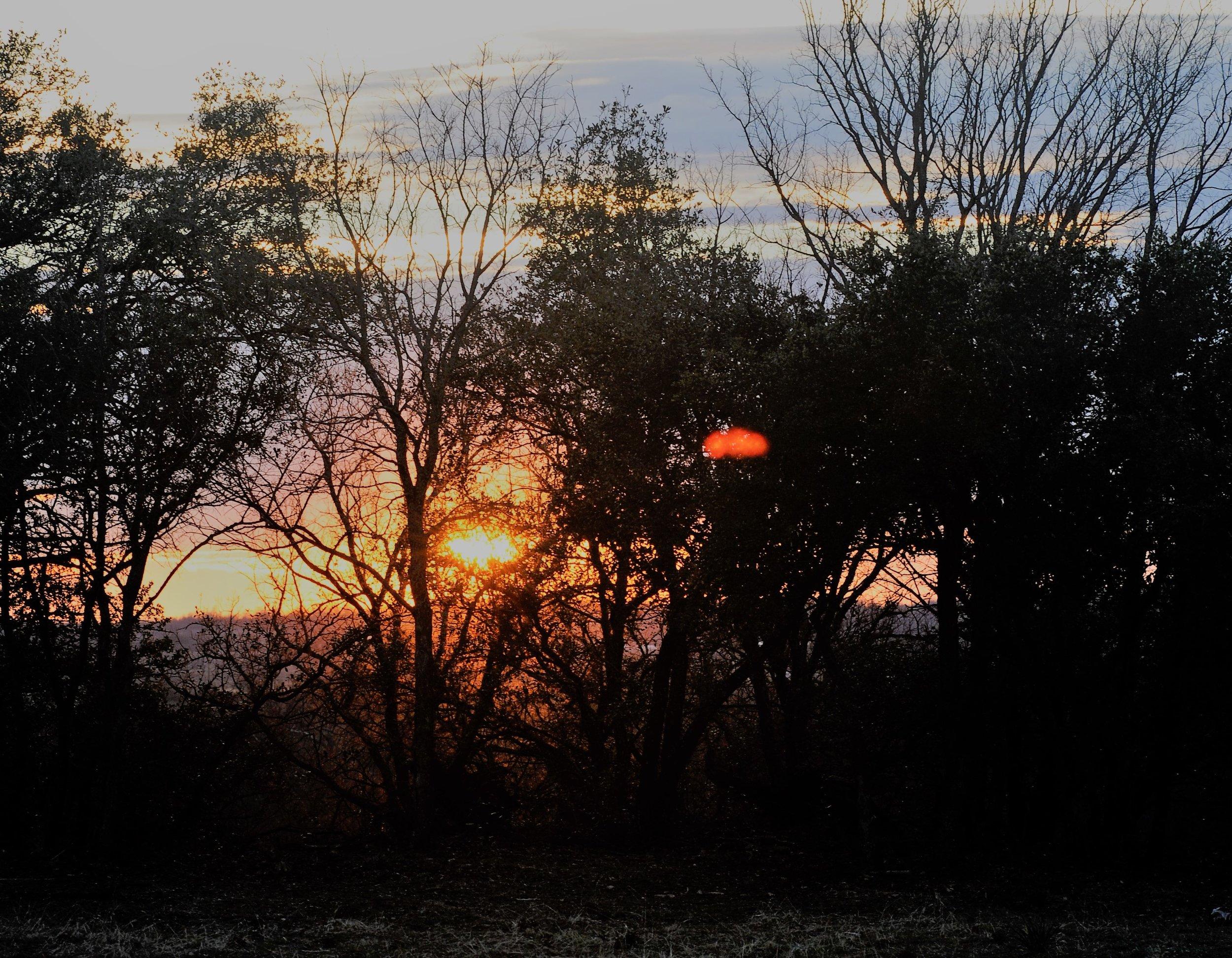 2 Sunset trees.JPG