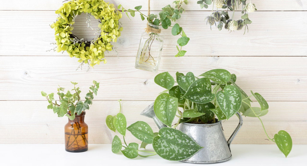 Let the idea of indoor plants start to grow on you in 2019.