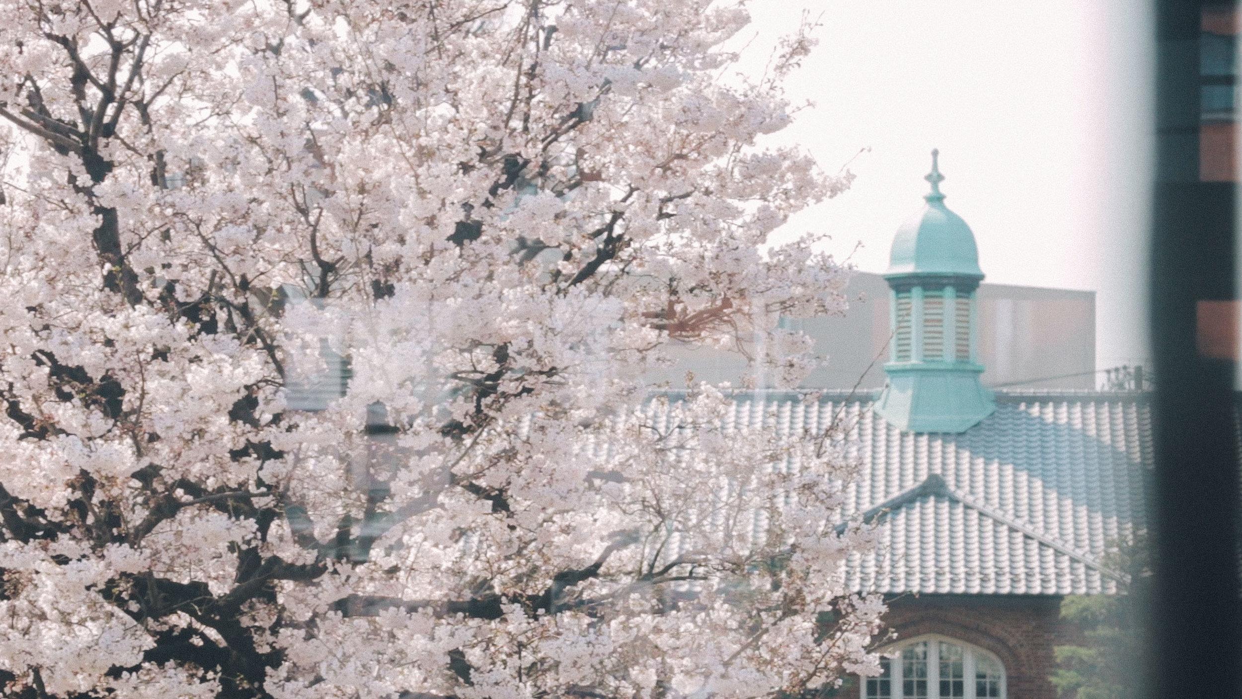 Rikkyo_Spring_th1_2.jpg