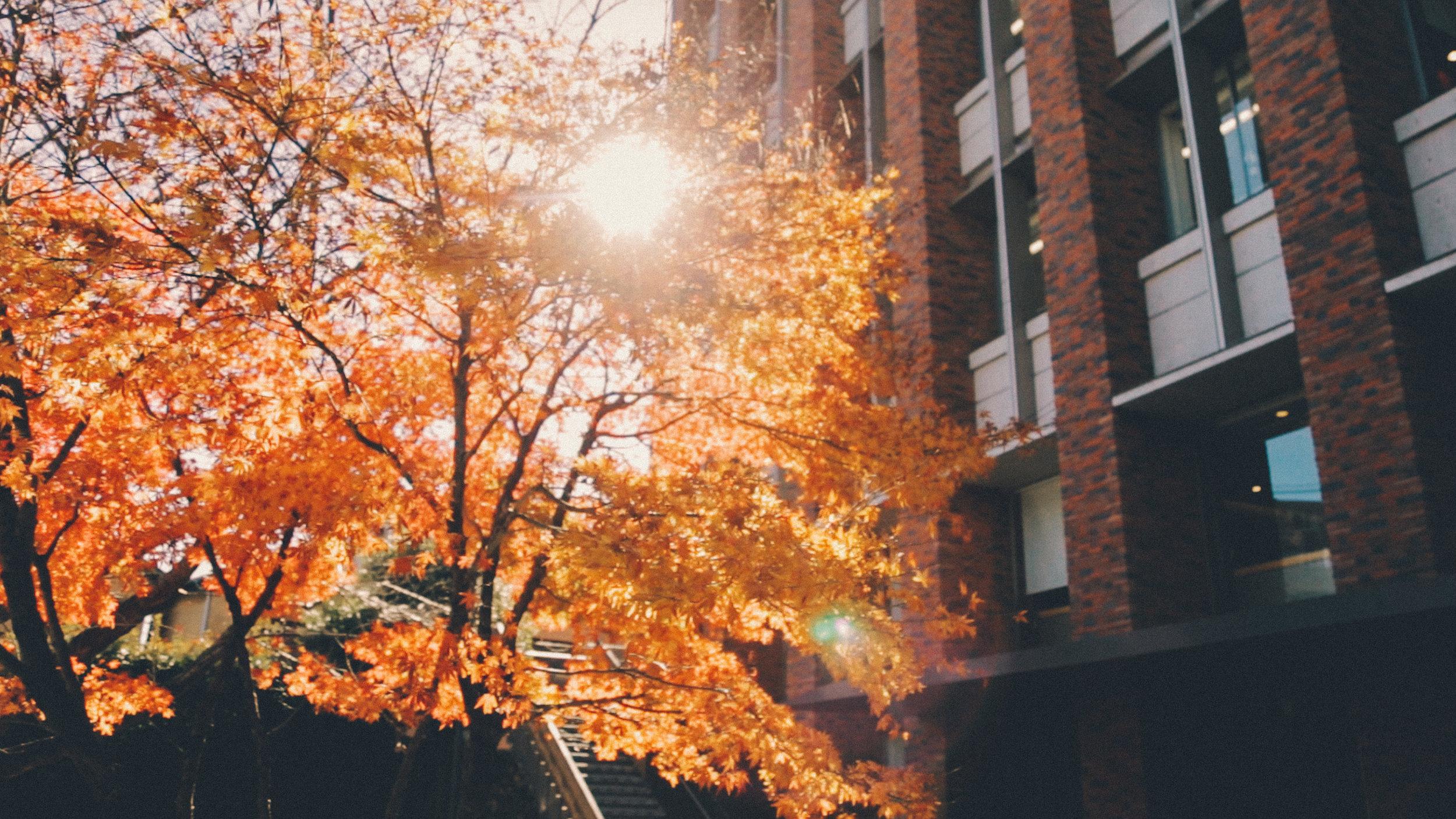 rikkyo_autumn7.jpg