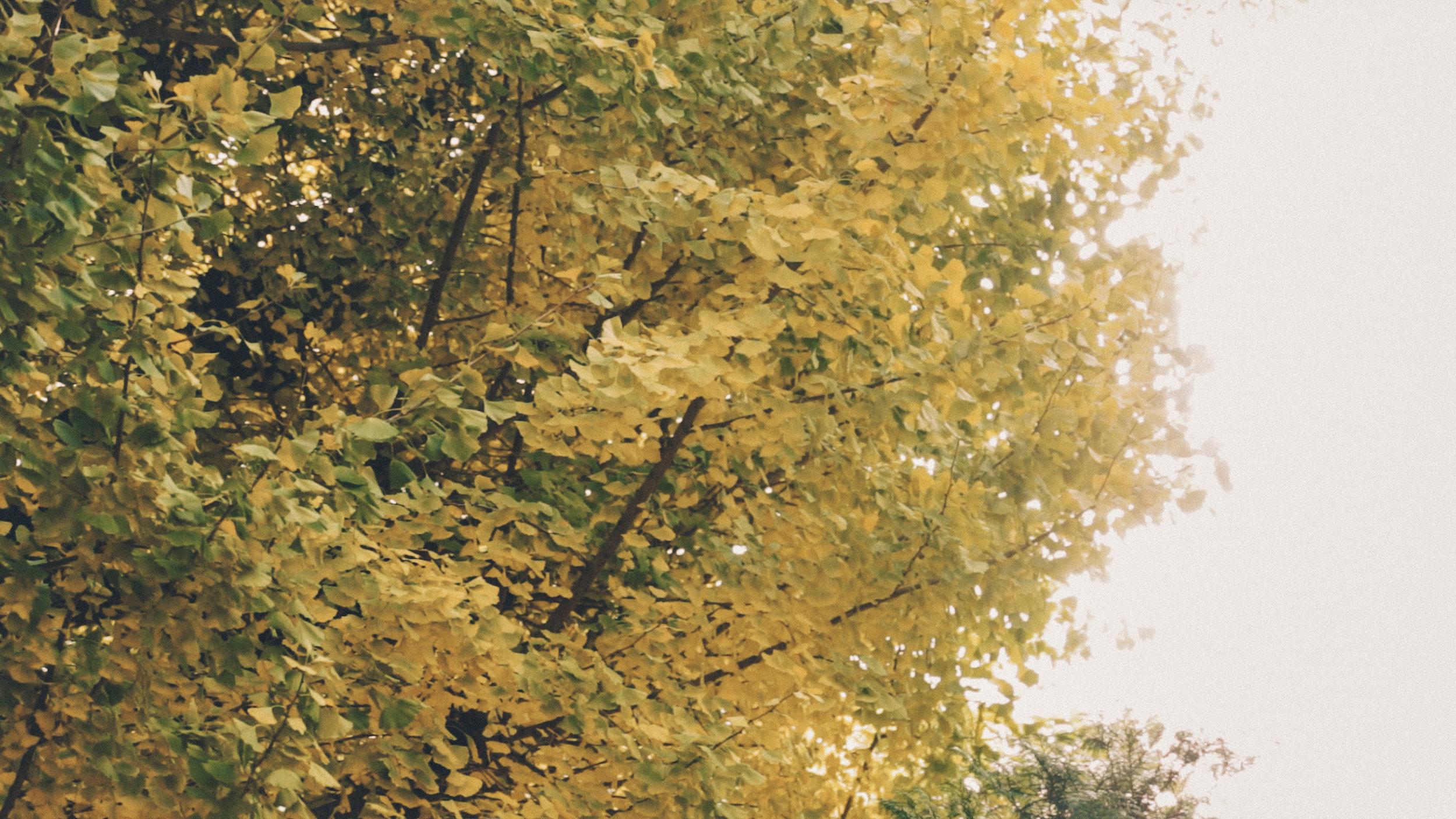 rikkyo_autumn5.jpg