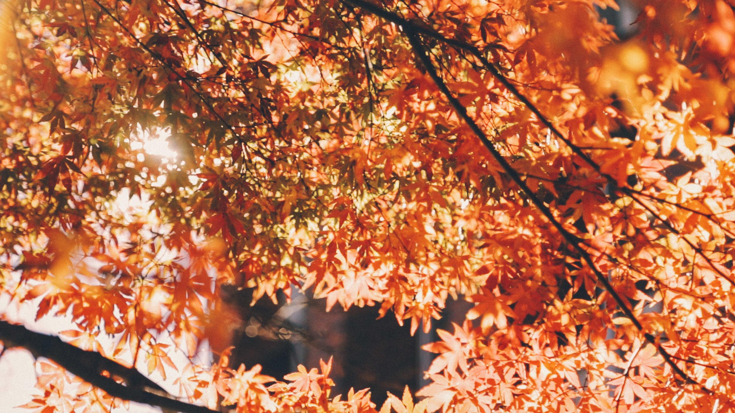 rikkyo_autumn2.jpg