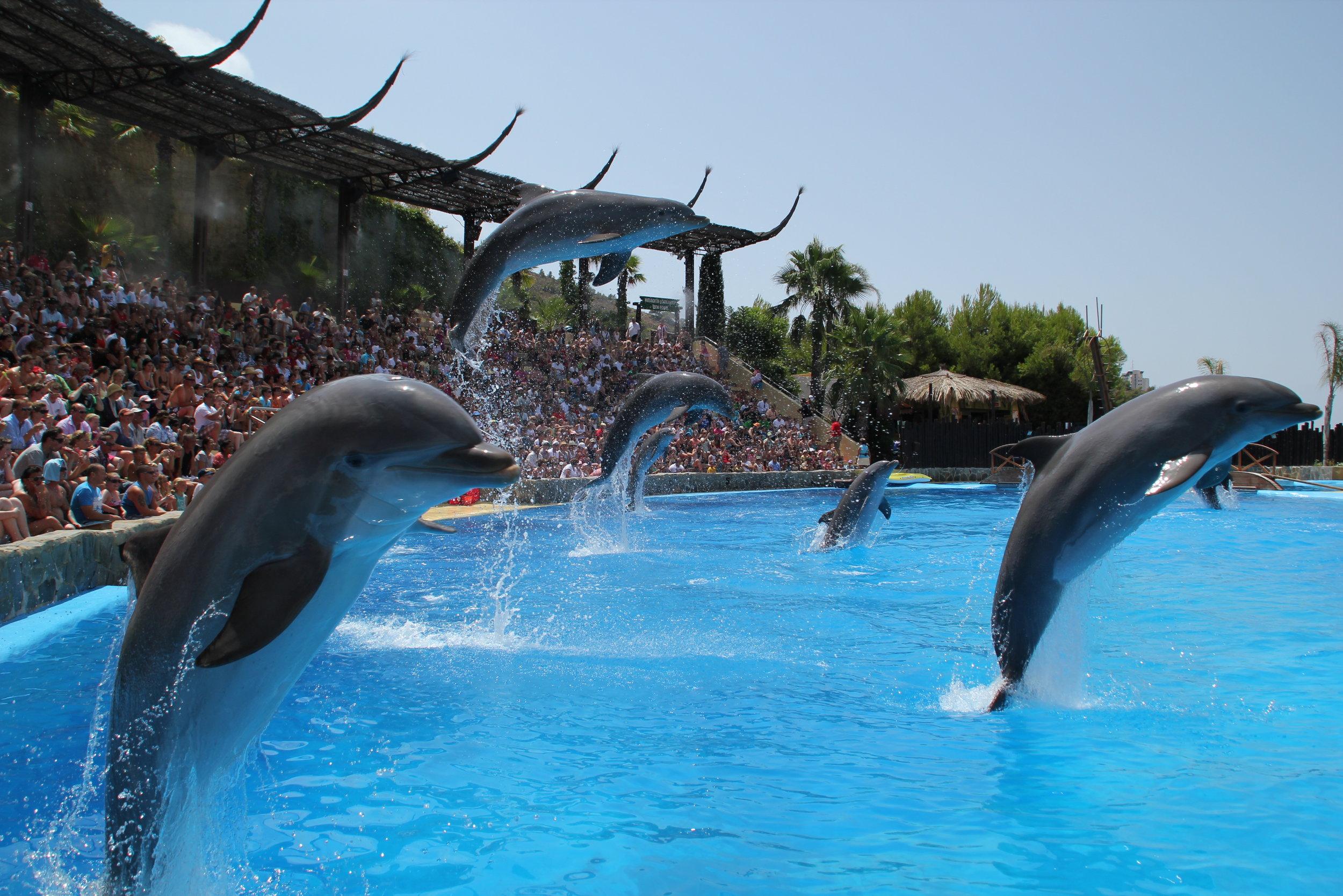 delfines1.JPG