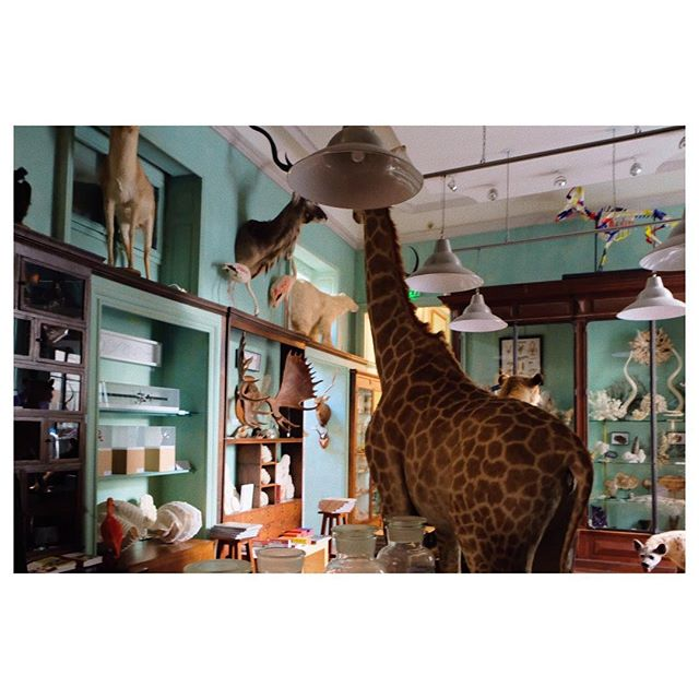 Let's talk about the giraffe in the room #thingsilove