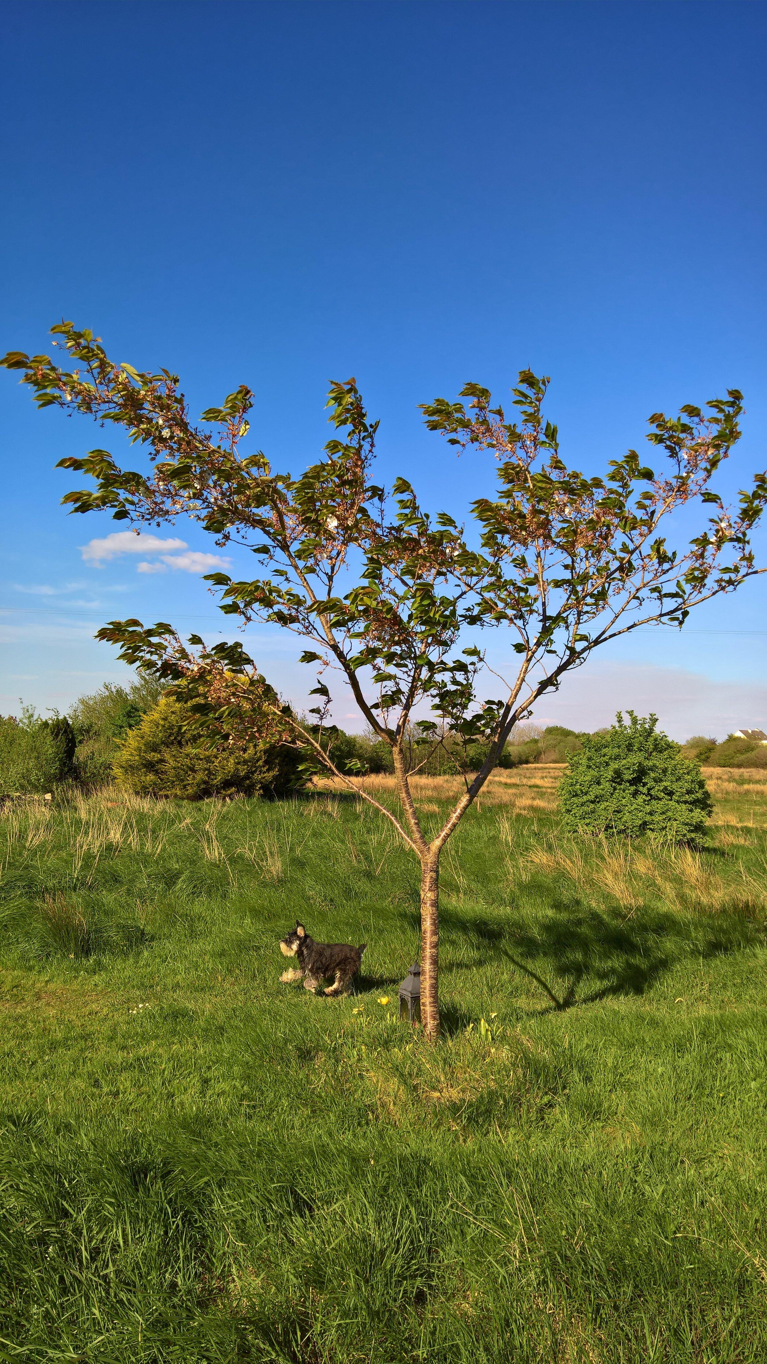 My mum's tree - and Toby.