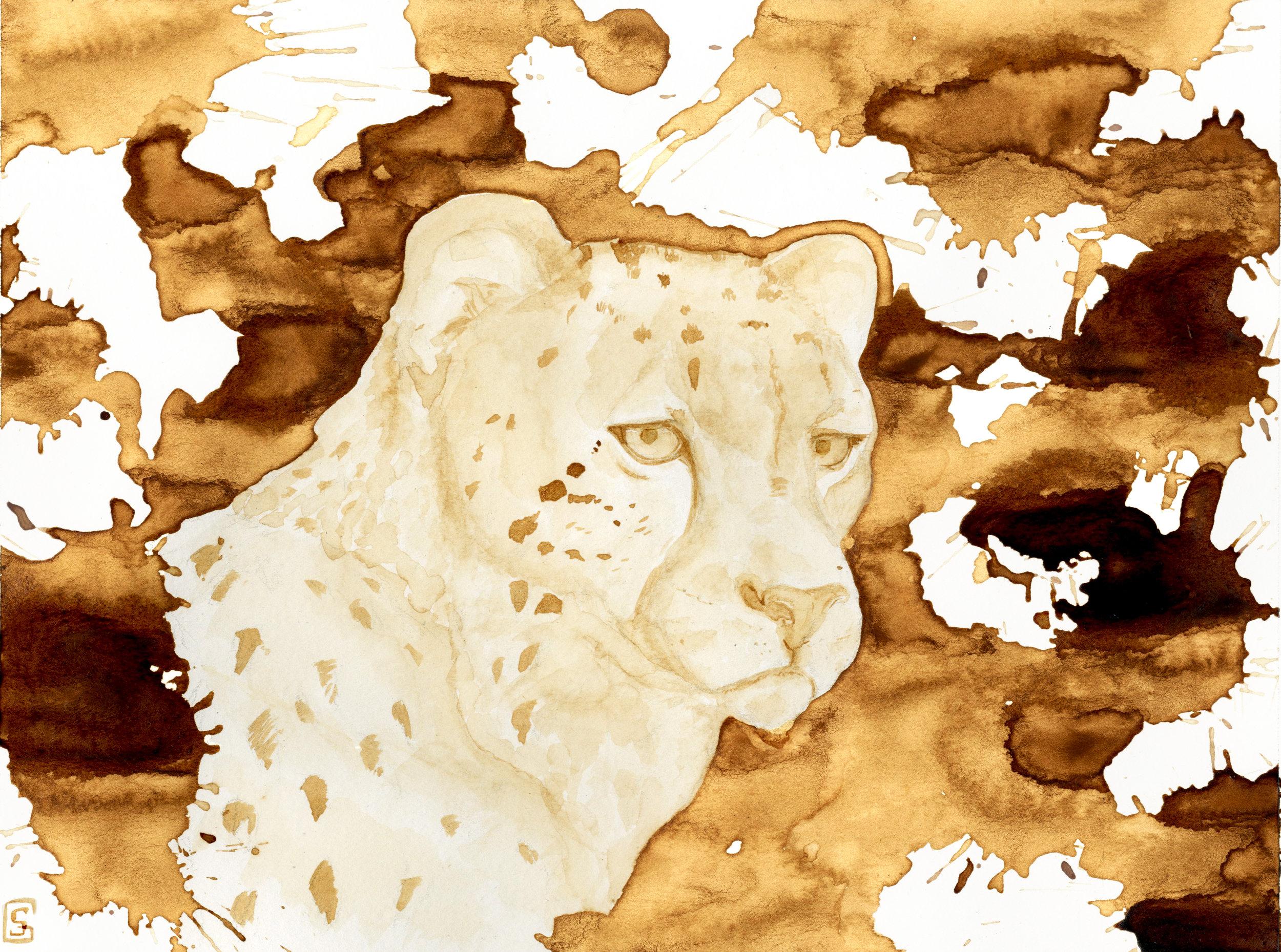 cheetah_SCAN.jpg