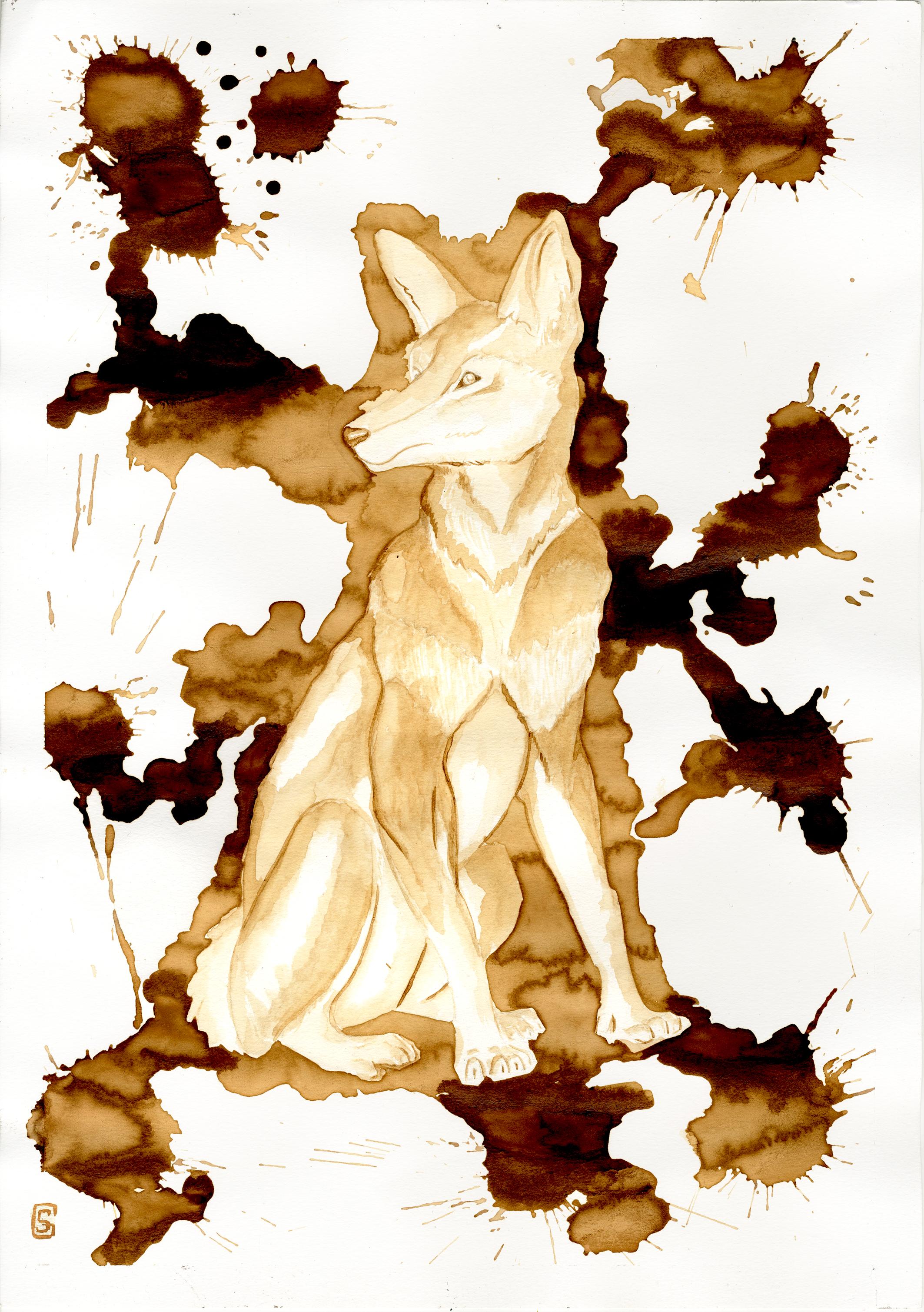 small wolf.jpg