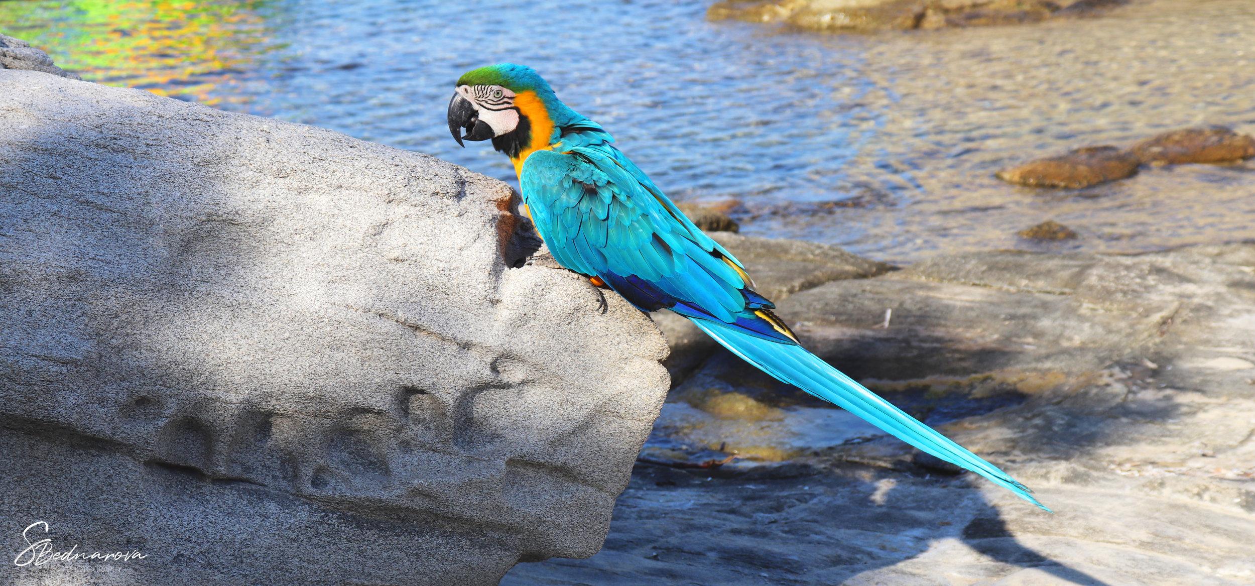 beach parrot.jpg