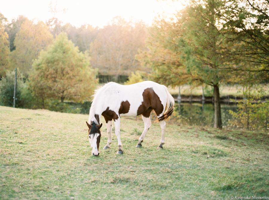 goldsboro-north-carolina-farm-engagement-photos-14.jpg