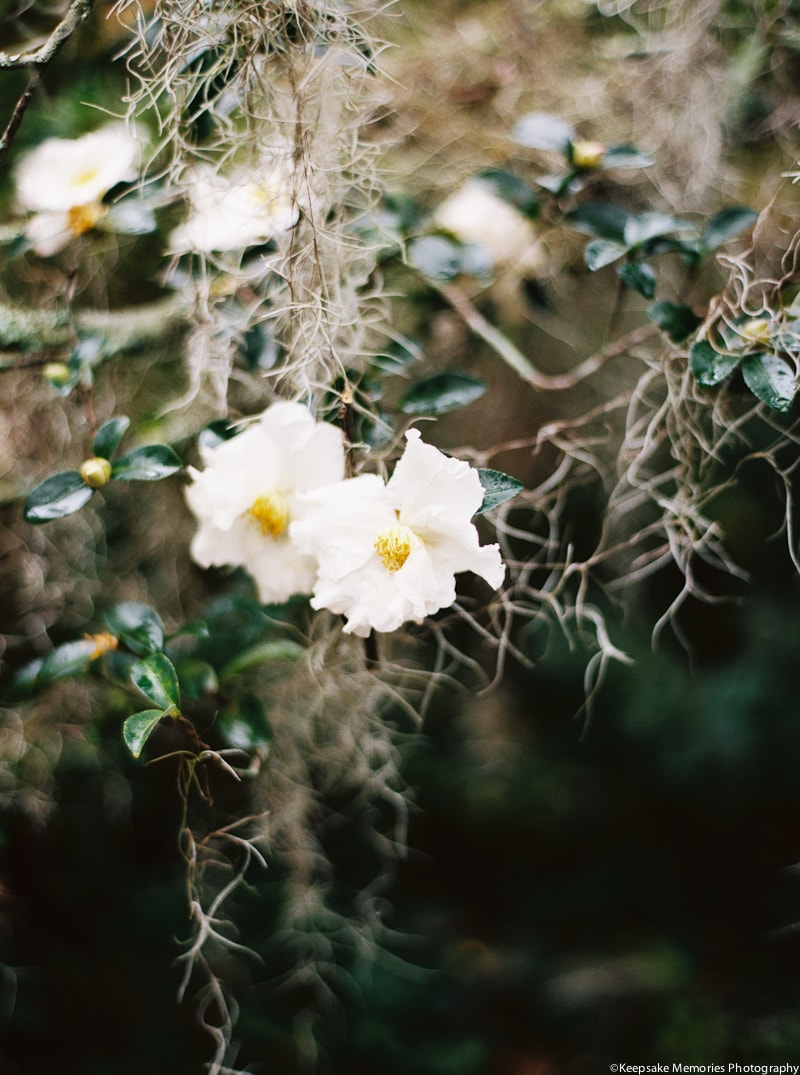 airlie-gardens-wilmington-nc-bridal-photography-5-min.jpg