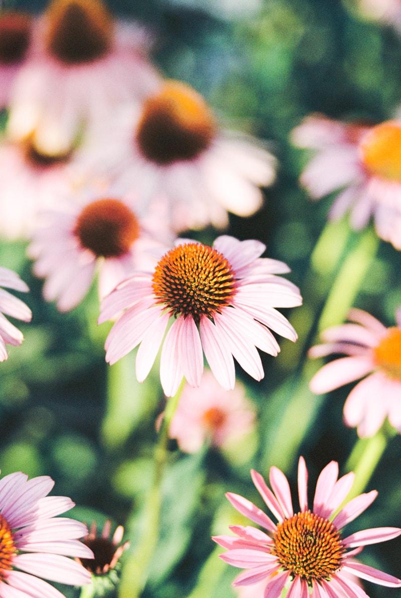 nature-photography-north-carolina-flowers-gardens-10-min.jpg