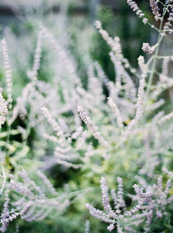 nature-photography-north-carolina-flowers-gardens-11-min.jpg