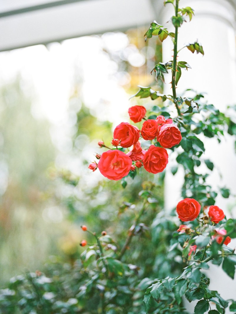 nature-photography-north-carolina-flowers-gardens-3-min.jpg