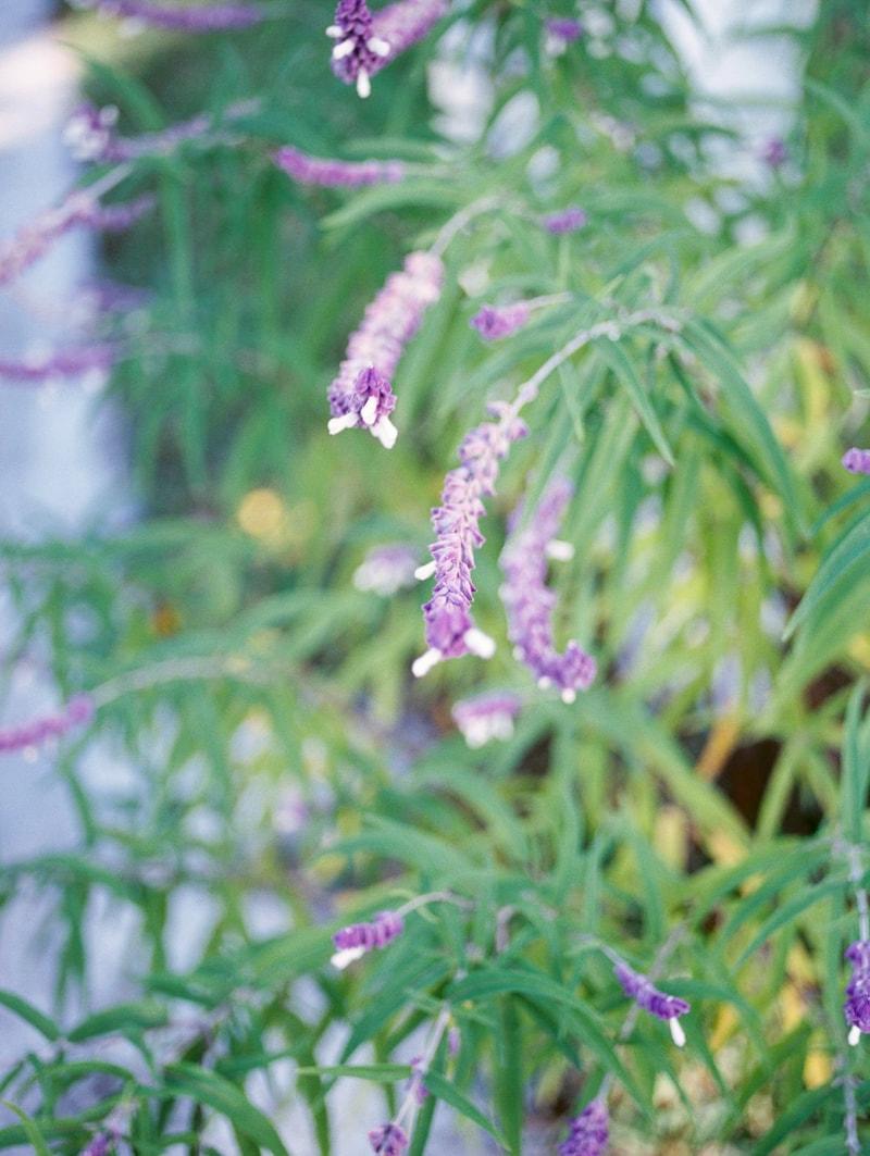 nature-photography-north-carolina-flowers-gardens-5-min.jpg