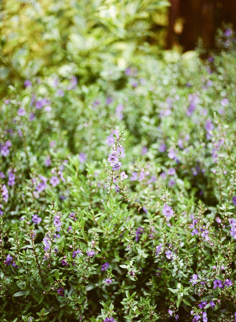 nature-photography-north-carolina-flowers-gardens-8-min.jpg