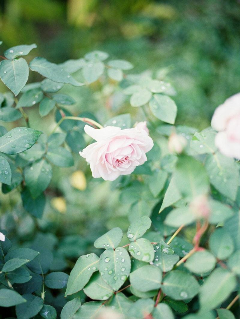 nature-photography-north-carolina-flowers-gardens-min.jpg