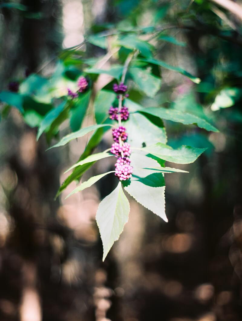 forest-new-bern-bridal-portraits-nc-photography-9.jpg