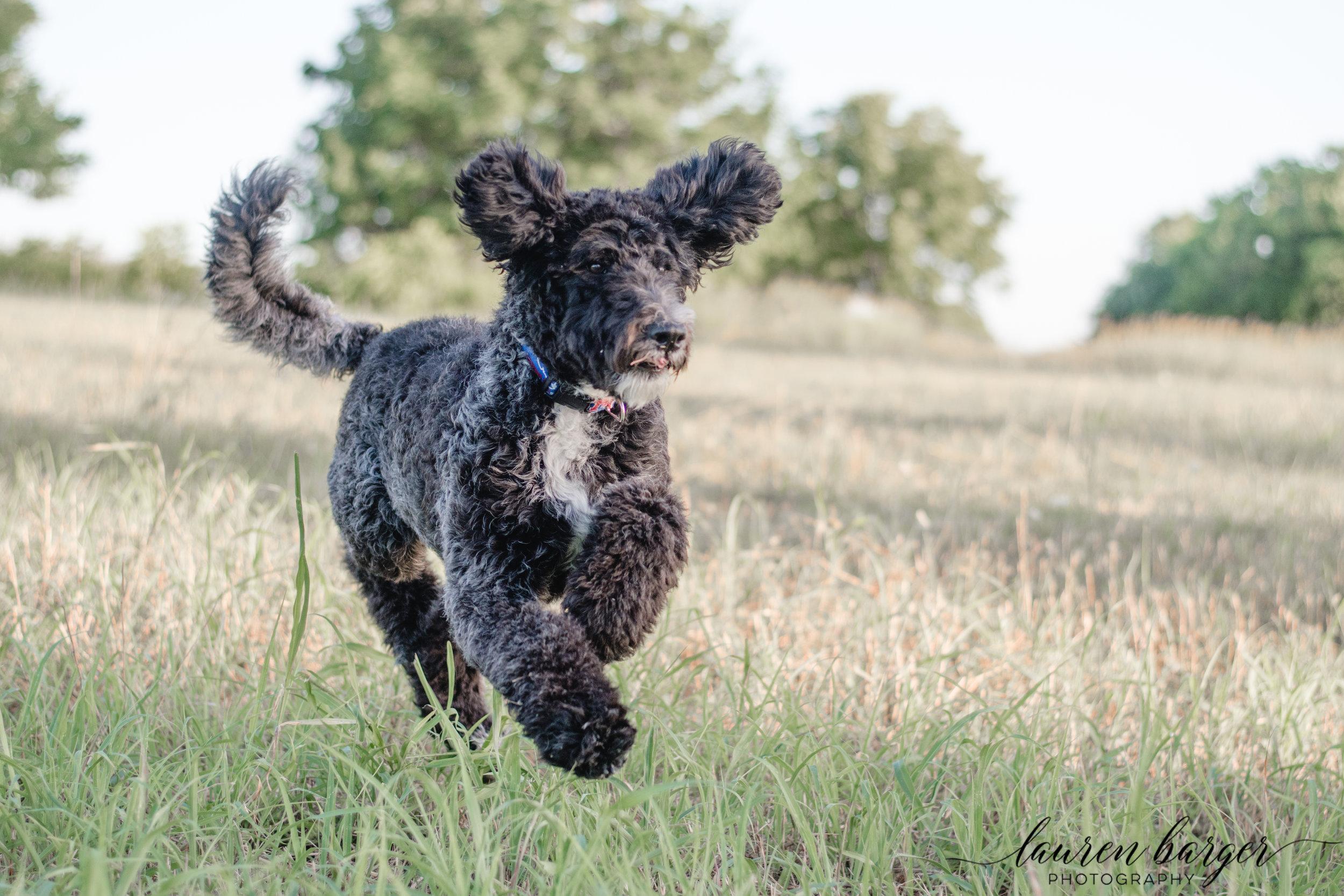dogdaydoug-0396.jpg