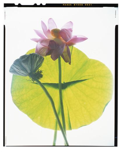 HHStewartpresident lotus004.jpg