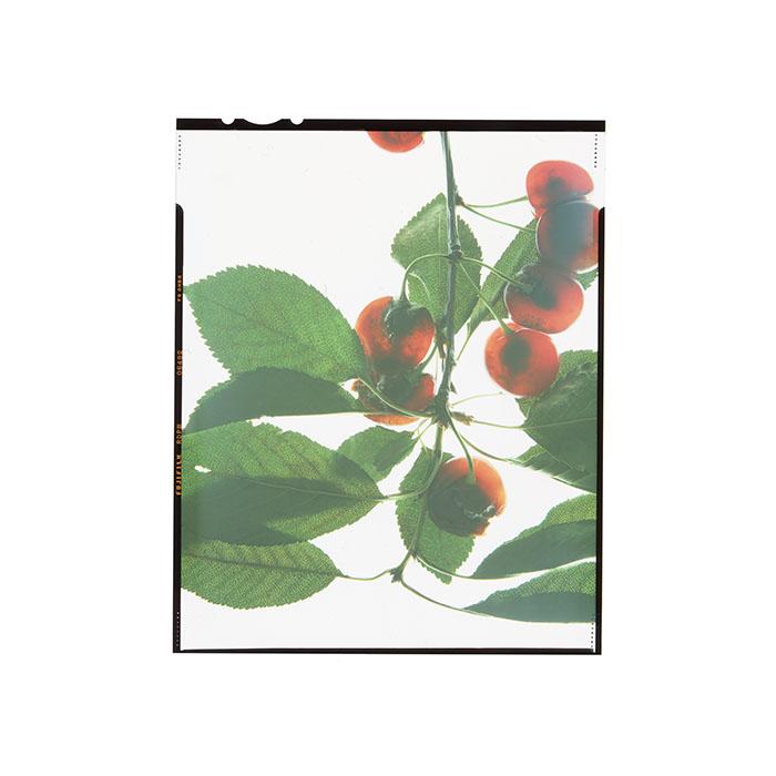 Prunus sp. HHS.jpg