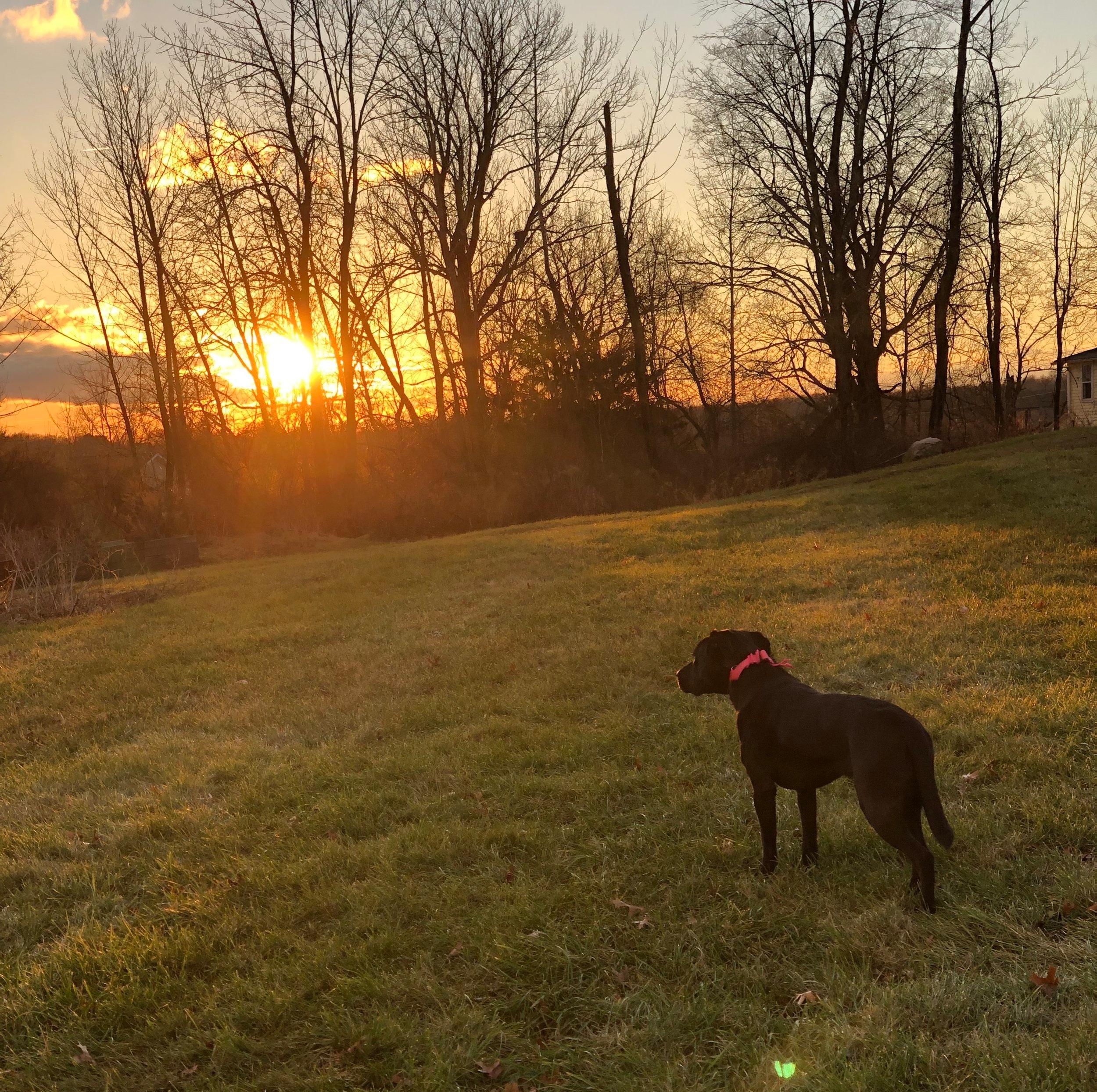 Enjoying a sunrise