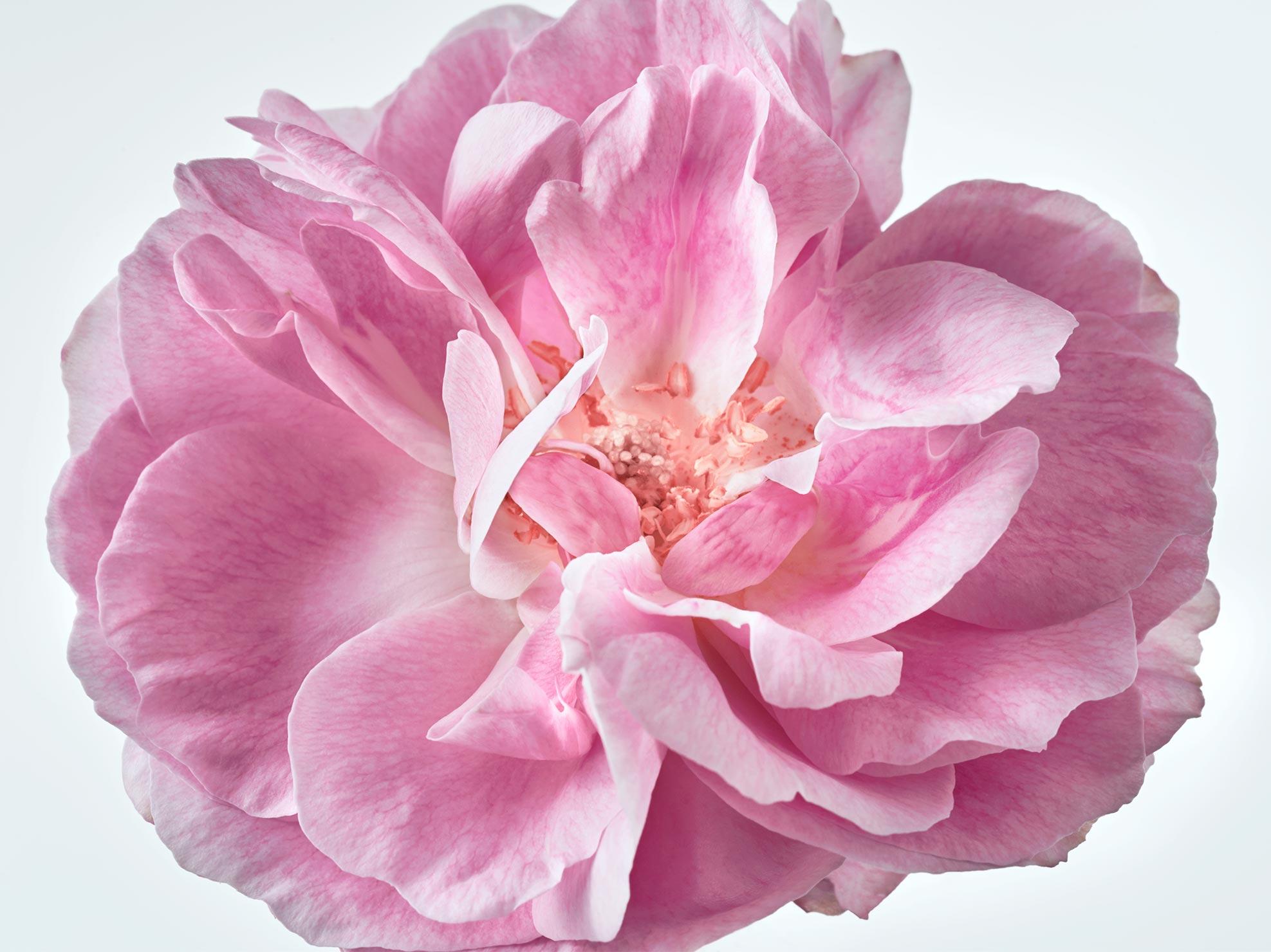 56-Flora-June20180241.jpg