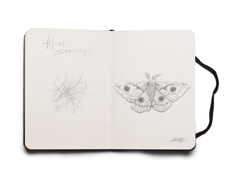 Moth Sketch.jpg