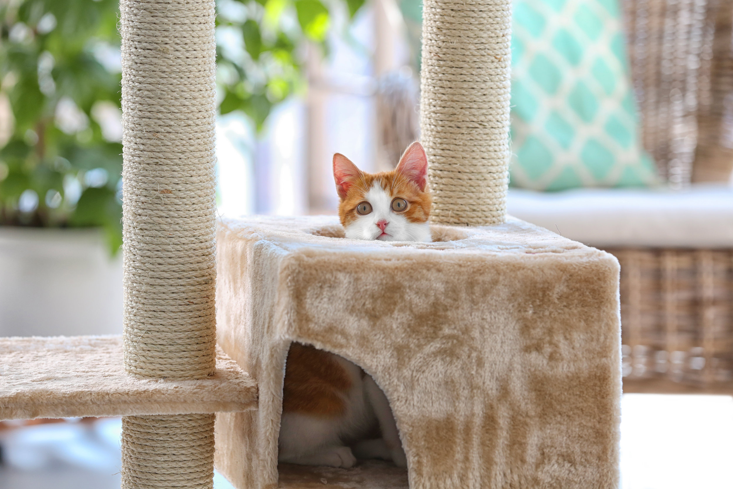 Cat Trees & Scratching Posts