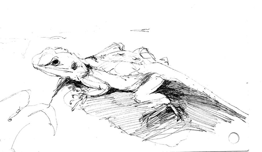 coco-connolly-lizard-1.jpg